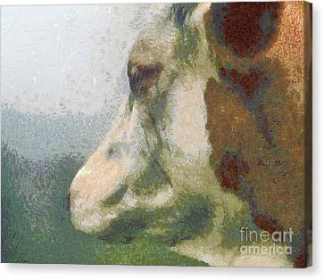 The Cow Portrait Canvas Print by Odon Czintos