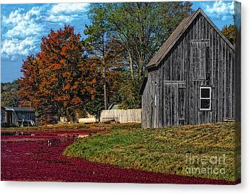 The Cranberry Farm Canvas Print by Gina Cormier