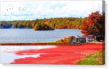 The Cranberry Farms Of Cape Cod Canvas Print