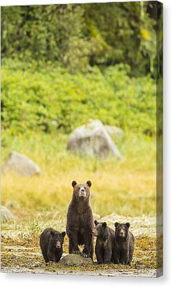 Prints Of Alaska Canvas Print - The Curious Mom by Tim Grams