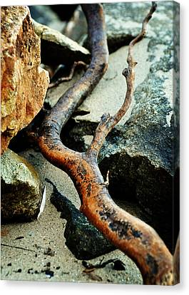 The Curving Branch Canvas Print by Rebecca Sherman