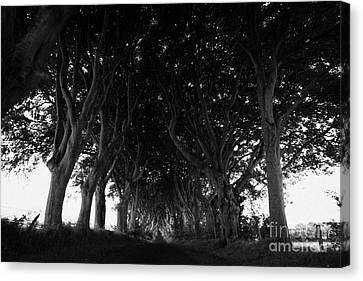The Dark Hedges Old Avenue Of Beech Trees Which Have Overgrown The Road Armoy County Antrim Ireland Canvas Print by Joe Fox