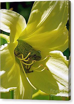 The Day Lily Met Her Prince Canvas Print by Sue Stefanowicz