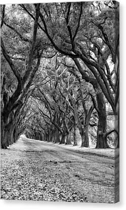 Evergreen Plantation Canvas Print - The Deep South Monochrome by Steve Harrington