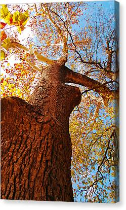 Canvas Print featuring the photograph The Deer  Autumn Leaves Tree by Peggy Franz