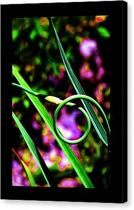 Canvas Print featuring the photograph The Divine Cosmos Of Garlic by Susanne Still