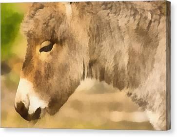 The Donkey Portrait Canvas Print by Odon Czintos