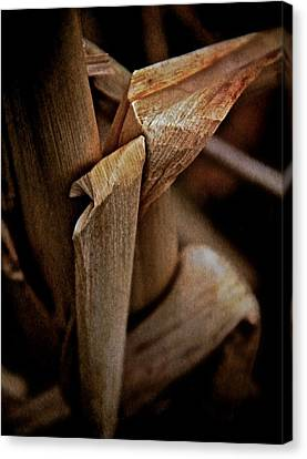 The Dry Season Canvas Print by Odd Jeppesen