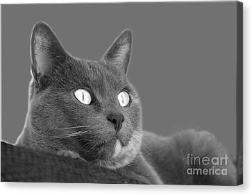 Canvas Print featuring the photograph The Eyes Have It by Nareeta Martin