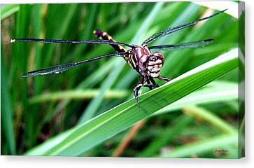 Canvas Print featuring the photograph The Face Of A Dragonfly 02 by George Bostian