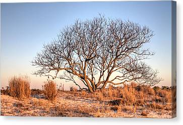 The Family Tree Canvas Print by JC Findley