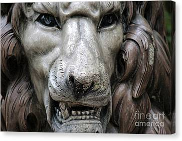 Canvas Print featuring the photograph The Fierce Lion  by Kathy  White