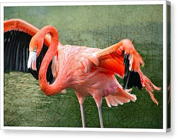 Canvas Print featuring the photograph The Flamingo by Rosemary Aubut