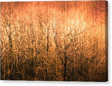 Canvas Print featuring the photograph The Forest Fire by Justin Albrecht
