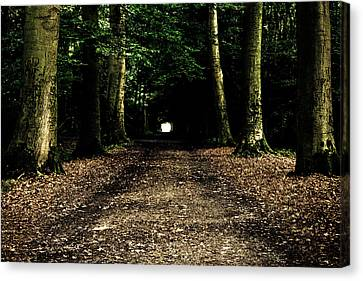The Forest Tunnel Canvas Print by Justin Albrecht