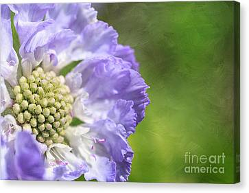 The Garden Girl Canvas Print by Beve Brown-Clark Photography