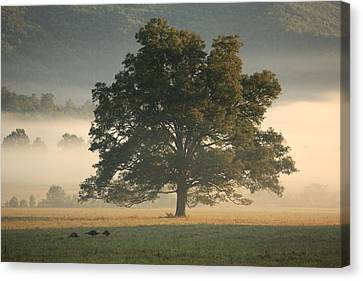 Canvas Print featuring the photograph The Giving Tree by Doug McPherson