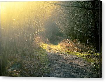 Canvas Print featuring the photograph The Glowing Path by Justin Albrecht