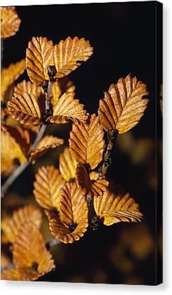 The Golden Autumn Colors Canvas Print by Jason Edwards