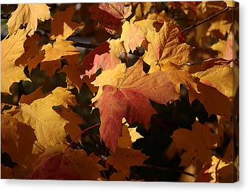 The Golden Days Of October Canvas Print by Lyle Hatch