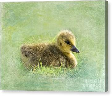 Geese Canvas Print - The Gosling by Betty LaRue