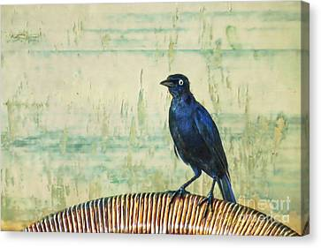 The Grackle Canvas Print by John Edwards