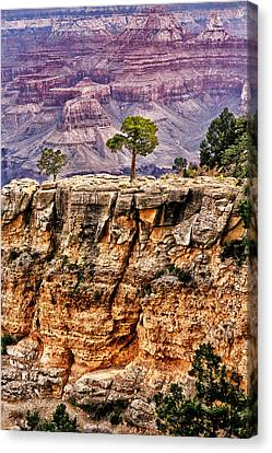 The Grand Canyon Iv Canvas Print by Tom Prendergast