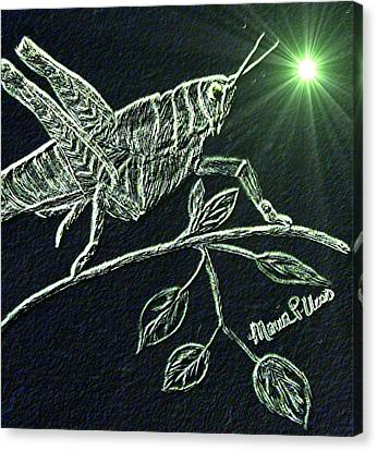 Canvas Print featuring the drawing The Grasshopper by Maria Urso