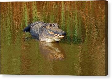 The Grin Canvas Print by Kathy Gibbons