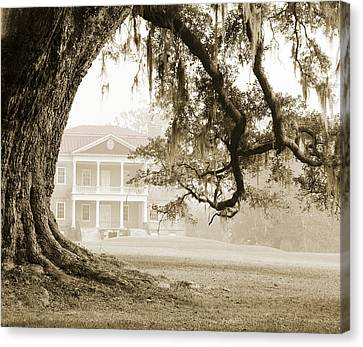 Drayton Hall Canvas Print - The Guardian Tree by Jan W Faul