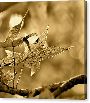 The Gum Leaf Canvas Print
