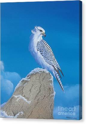 The Gyr Falcon Canvas Print