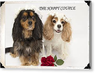 The Happy Couple Canvas Print by Daphne Sampson