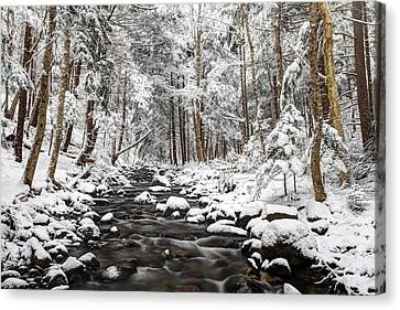 Into The Heart Of Winter Canvas Print by Scott Leslie