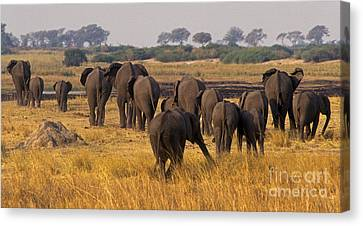 Canvas Print featuring the photograph The Herd - Chobe Np Botswana by Craig Lovell