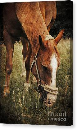 The Horse Canvas Print by Angela Doelling AD DESIGN Photo and PhotoArt