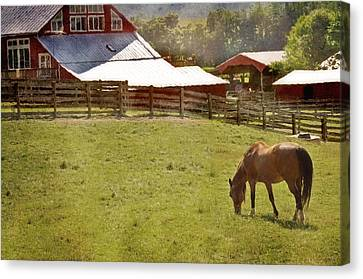 The Horse In The Barn Yard Canvas Print by Kathy Jennings