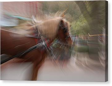 The Horse Canvas Print by Randy J Heath