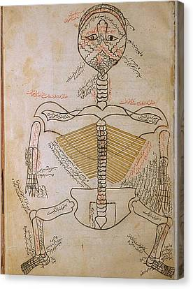 The Human Skeleton, From Mansurs Canvas Print