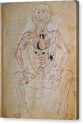 The Human Venous System, From Mansurs Canvas Print