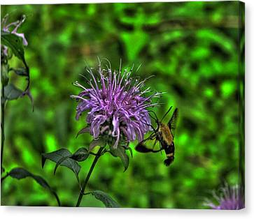 The Imposter Canvas Print