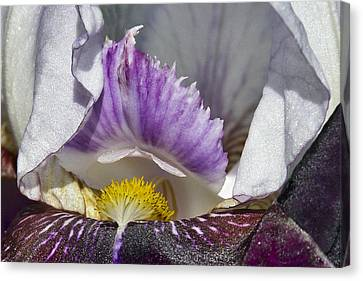 Canvas Print featuring the photograph The Iris by David Lester