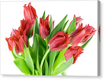 Canvas Print featuring the photograph The Isolated First Spring Tulips Background by Aleksandr Volkov