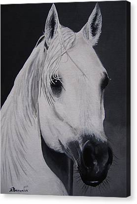 The Ivory Queen Canvas Print by Kayleigh Semeniuk