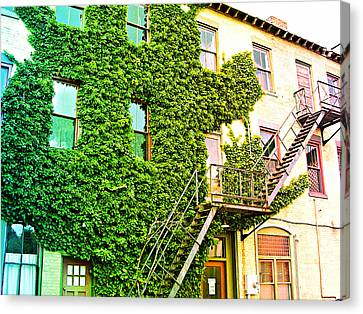 The Ivy And The Irony Canvas Print