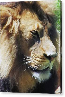 The King Canvas Print by Todd Sherlock