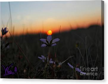 The Kiss Of Dawn Canvas Print by Wesley Hahn