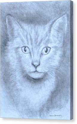 The Kitten Canvas Print by Jack Skinner