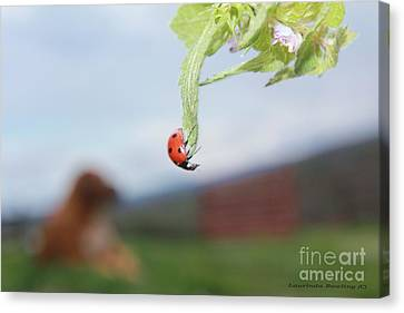 The Lady Bug No.1 Canvas Print by Laurinda Bowling