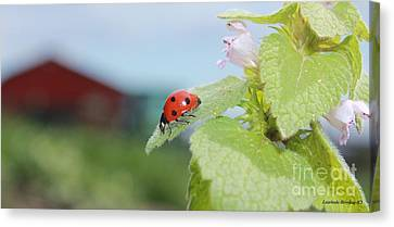 The Lady Bug  No.2 Canvas Print by Laurinda Bowling